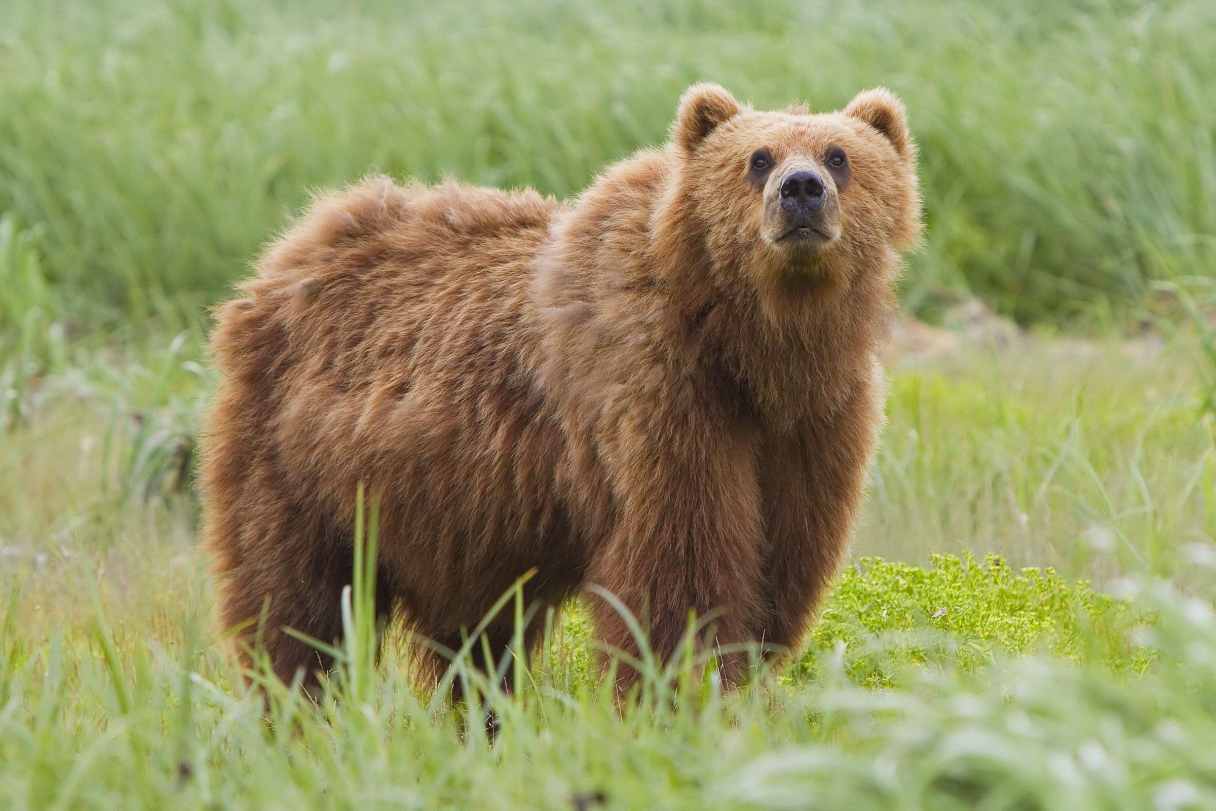 28 Ideas De Tundra Bioma Tundra ártica Oso Kodiak