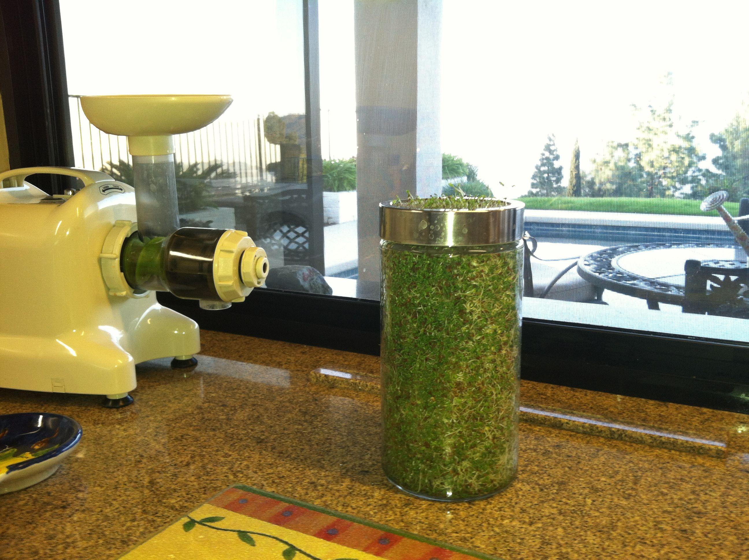 Alfalfa sprouts alfalfa sprouts coffee maker french press