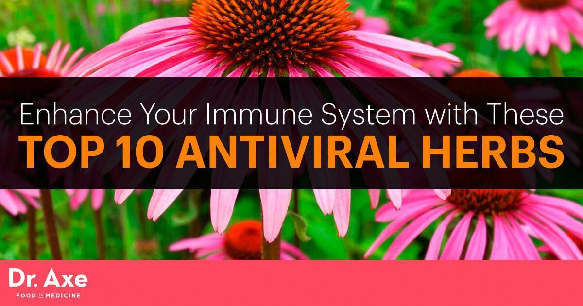 Antiviral herbs build your immune system and protect the