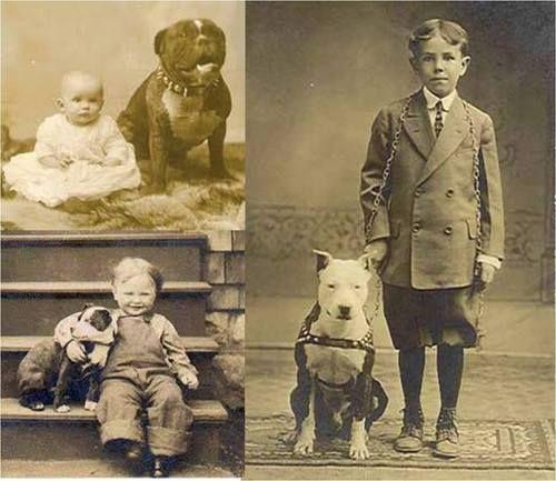 Los pitbull y los niños