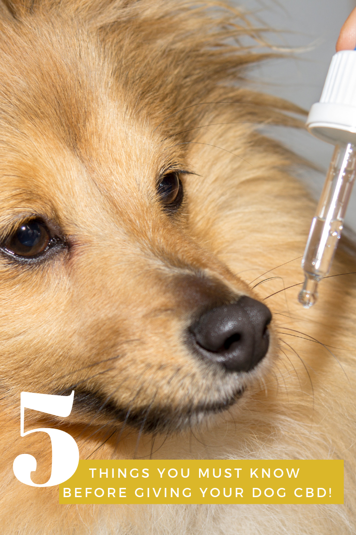 5 Things You Must Know Before Giving Your Dog Cbd Dog Advice Dogs Natural Pet Care