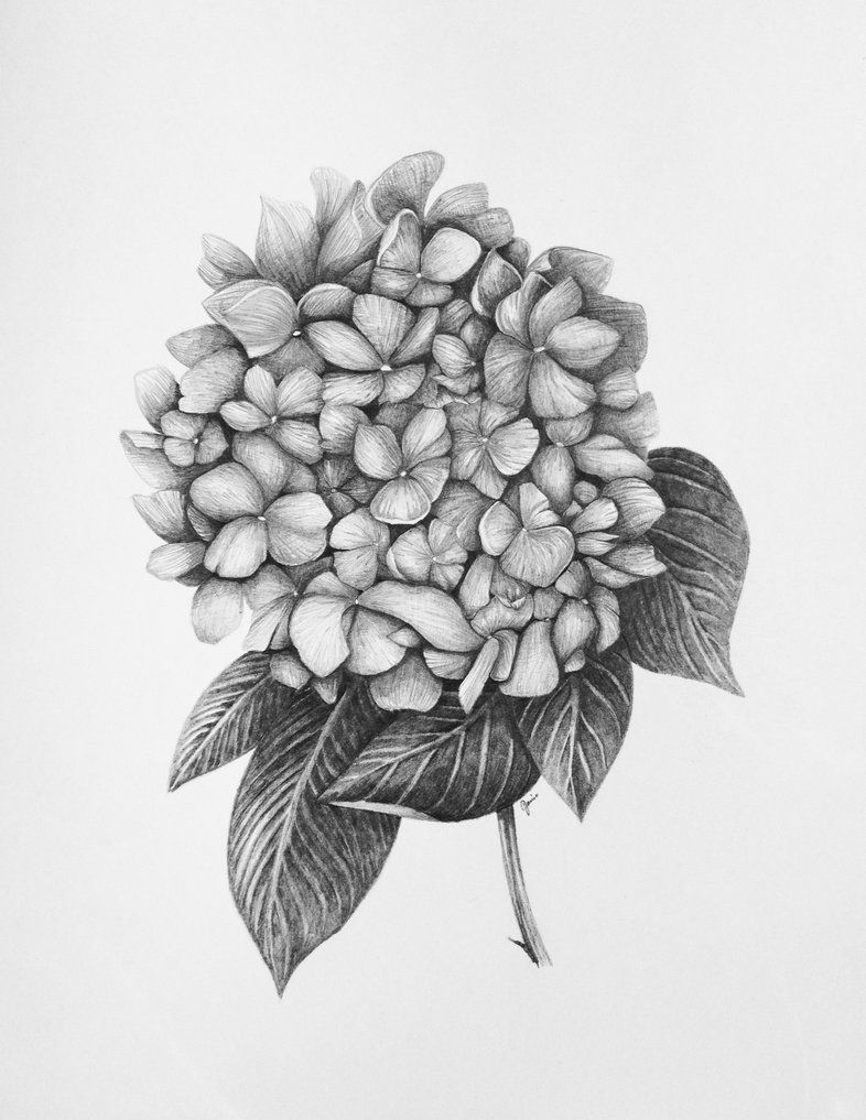 Similar Image For Wedding Logo Flower Drawing Hydrangea Tattoo Bouquet Tattoo