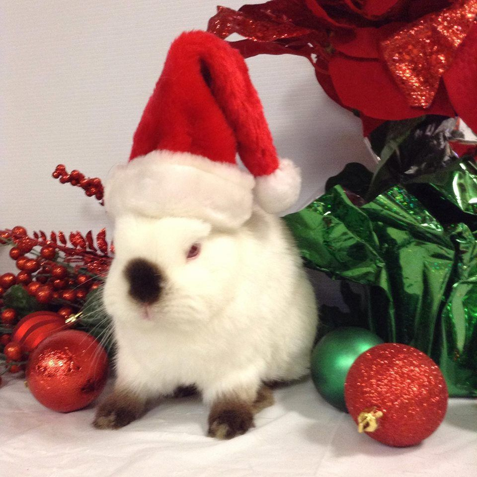 I am NOT ready for Christmas! Thump! | Cotton Tail | Pinterest | Animal