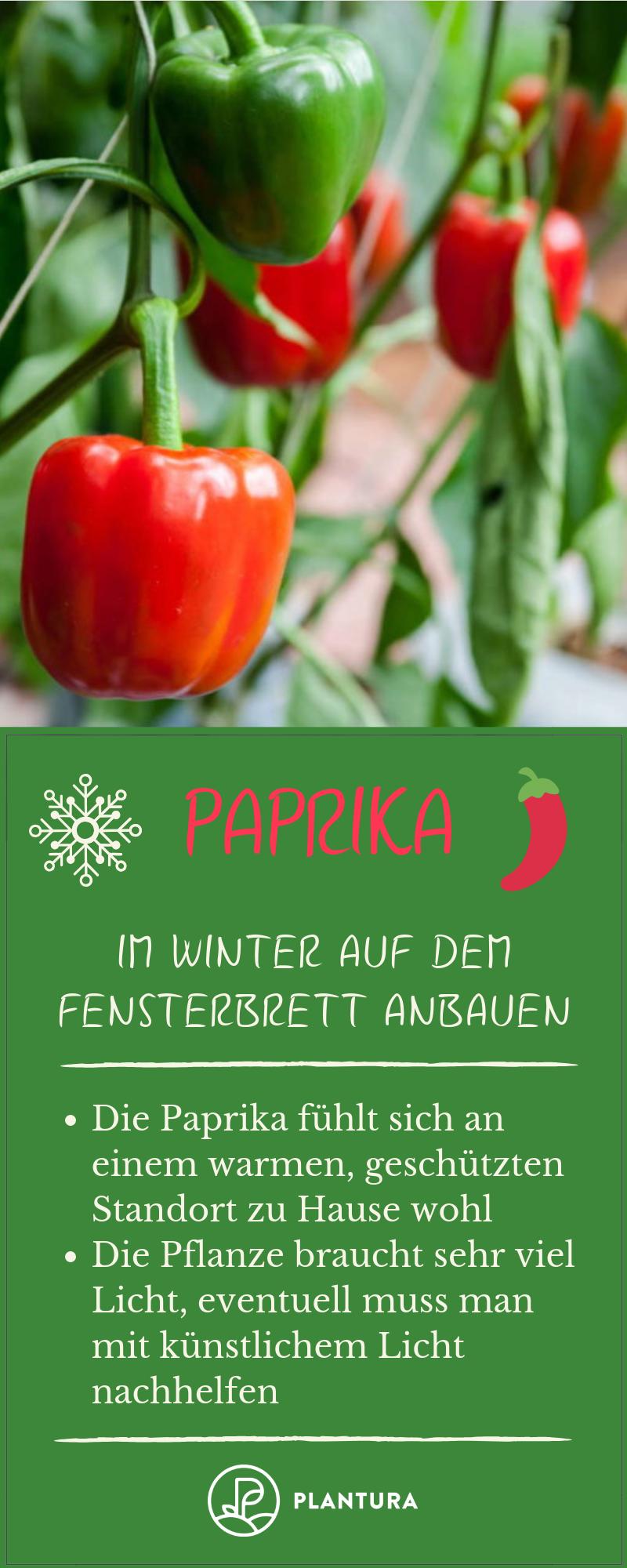 12 Pflanzen, die auf dem Fensterbrett gedeihen (auch im Winter) #wintergardening