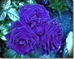 flores-flowers-flor-fleurs-132