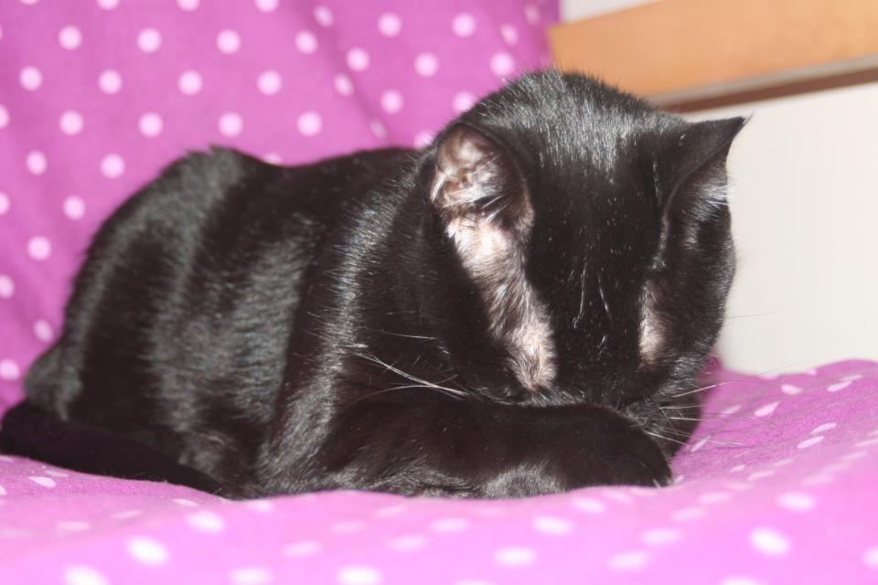 a vida de gato é cansativa!