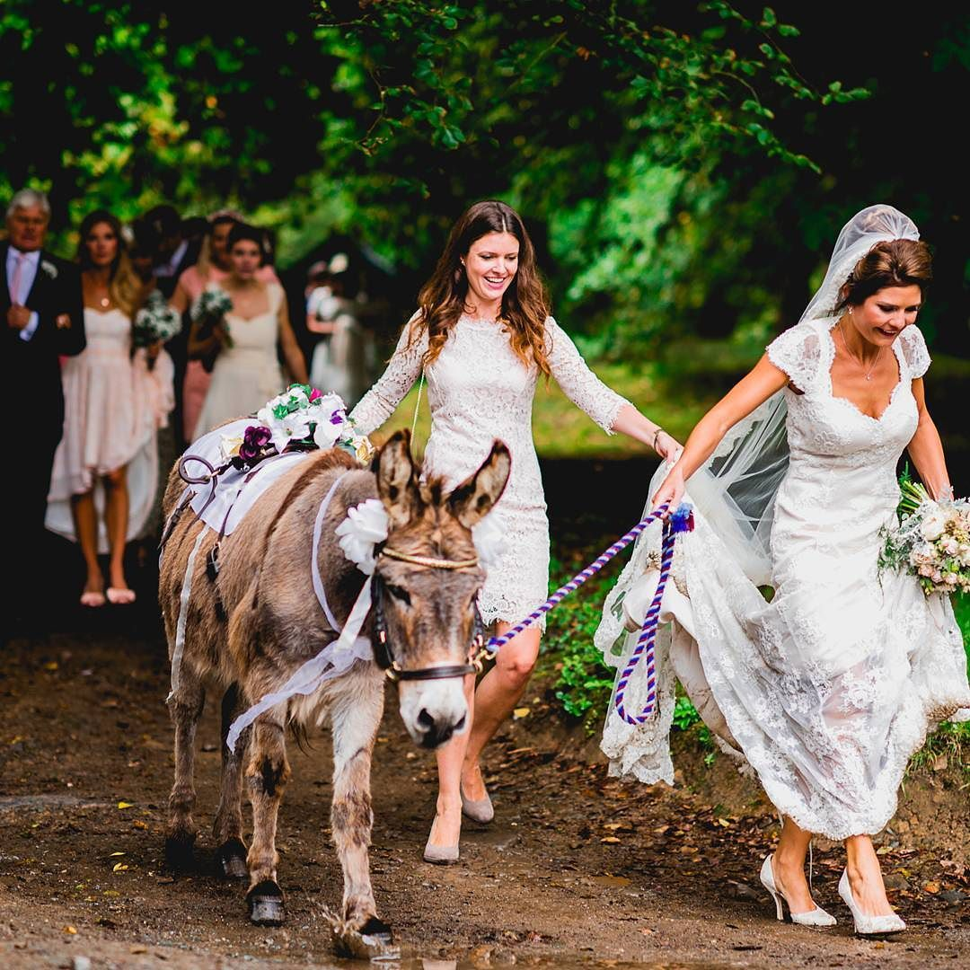 Beautiful Bride With Traditional Donkey At Clovelly Court