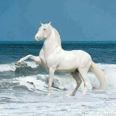 A beauty by the sea!!