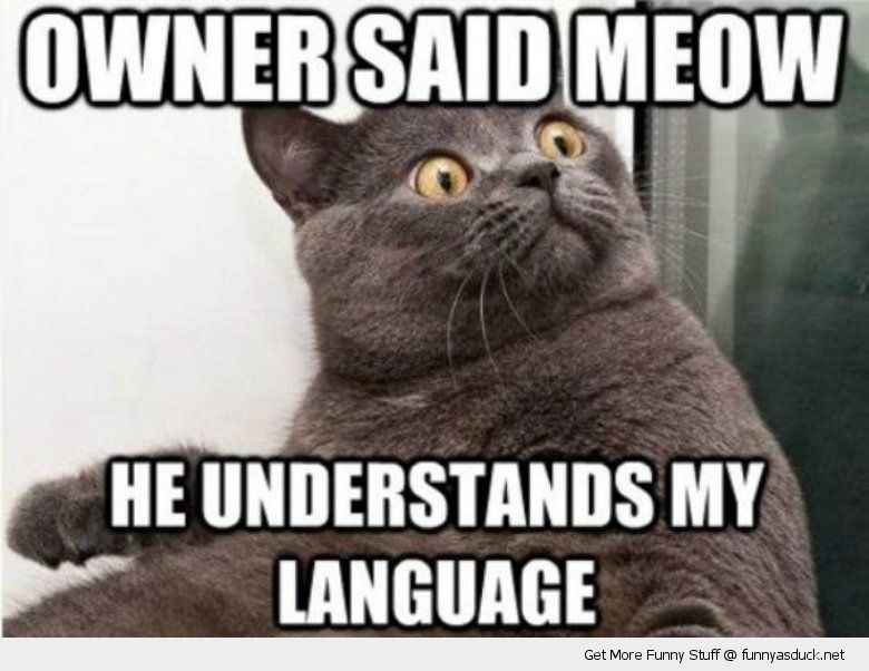 Funny Kid Friendly Cat Memes : Owner said meow cat lolcat animal funny pics pictures pic picture