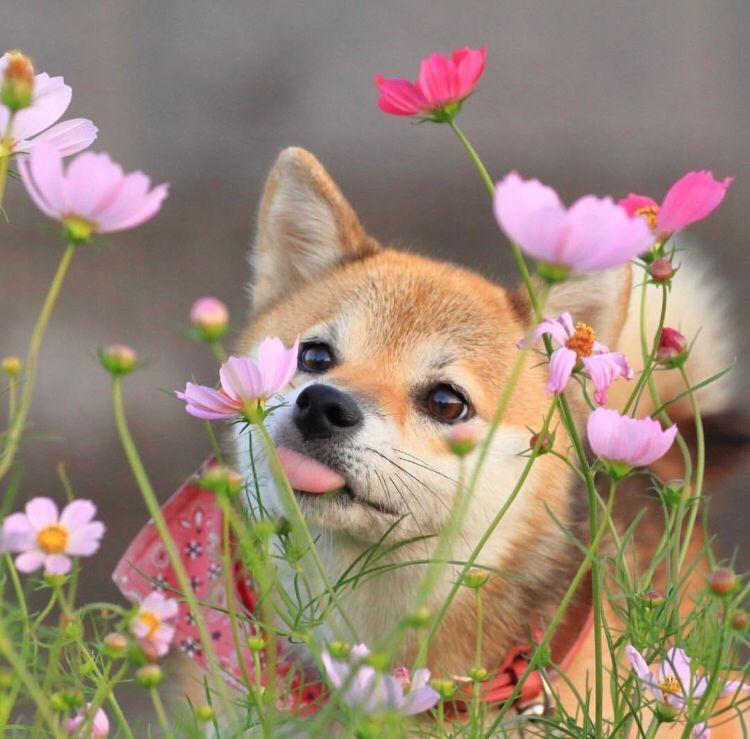 счет мимимишные фото собак бывалых