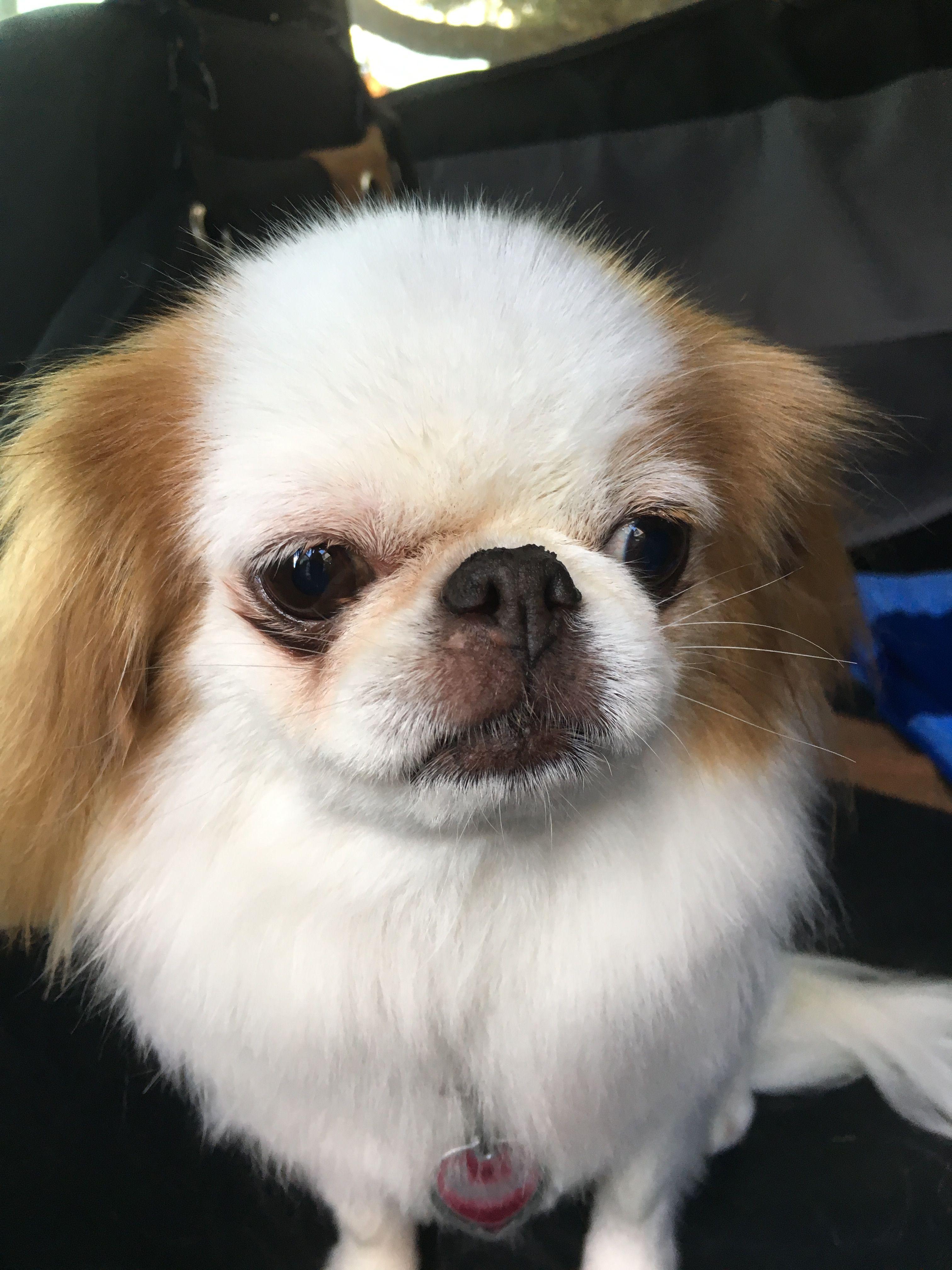 Puppy rescue greensboro nc