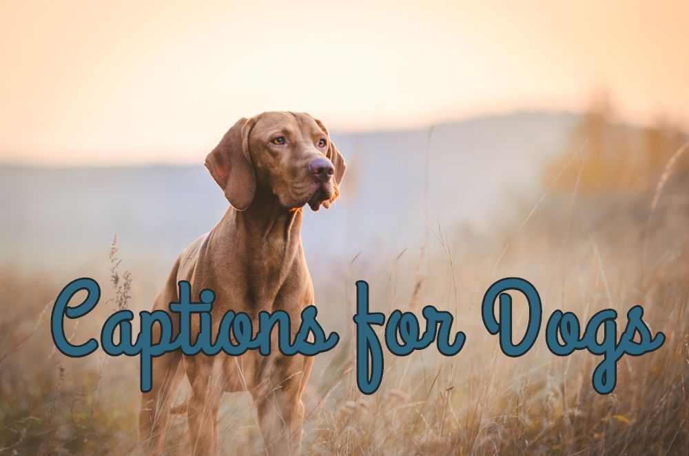 100 Best Instagram Captions For Dogs Copy And Paste Dog Instagram Captions Funny Dog Captions Cute Instagram Captions