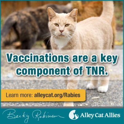 Want To Be An Advocate For Cats Learn The Facts About Rabies Which Is Often Misguidedly Used To Justify The Kill Feral Cats Alley Cat Allies Animal Advocacy