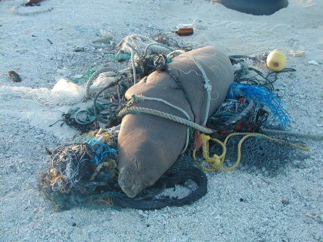 Untangling Both a Whale and Why Marine Life Get Mixed up With Our Trash
