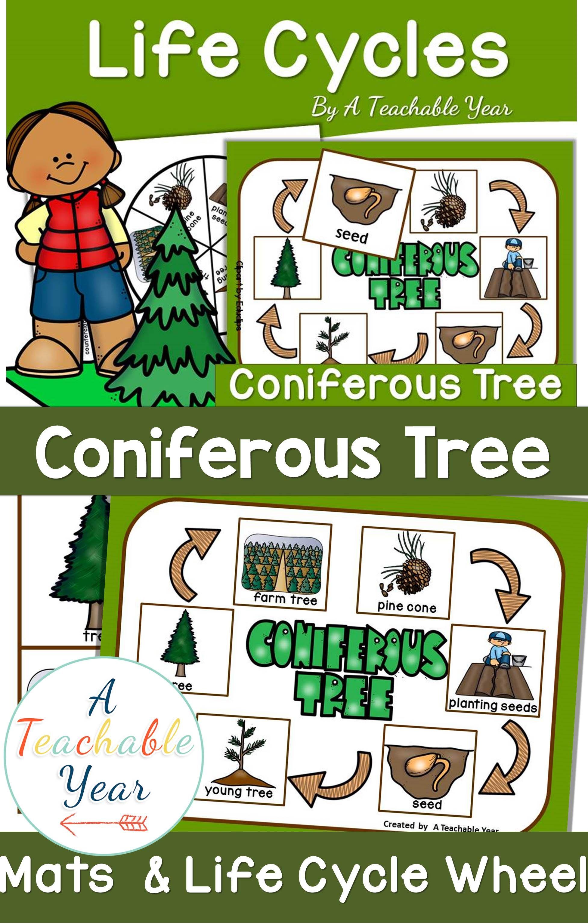 Coniferous Tree Life Cycle Activities