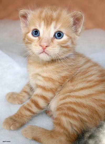 Vili Real Name Vilperi Kittens Cutest Cute Cats Cats
