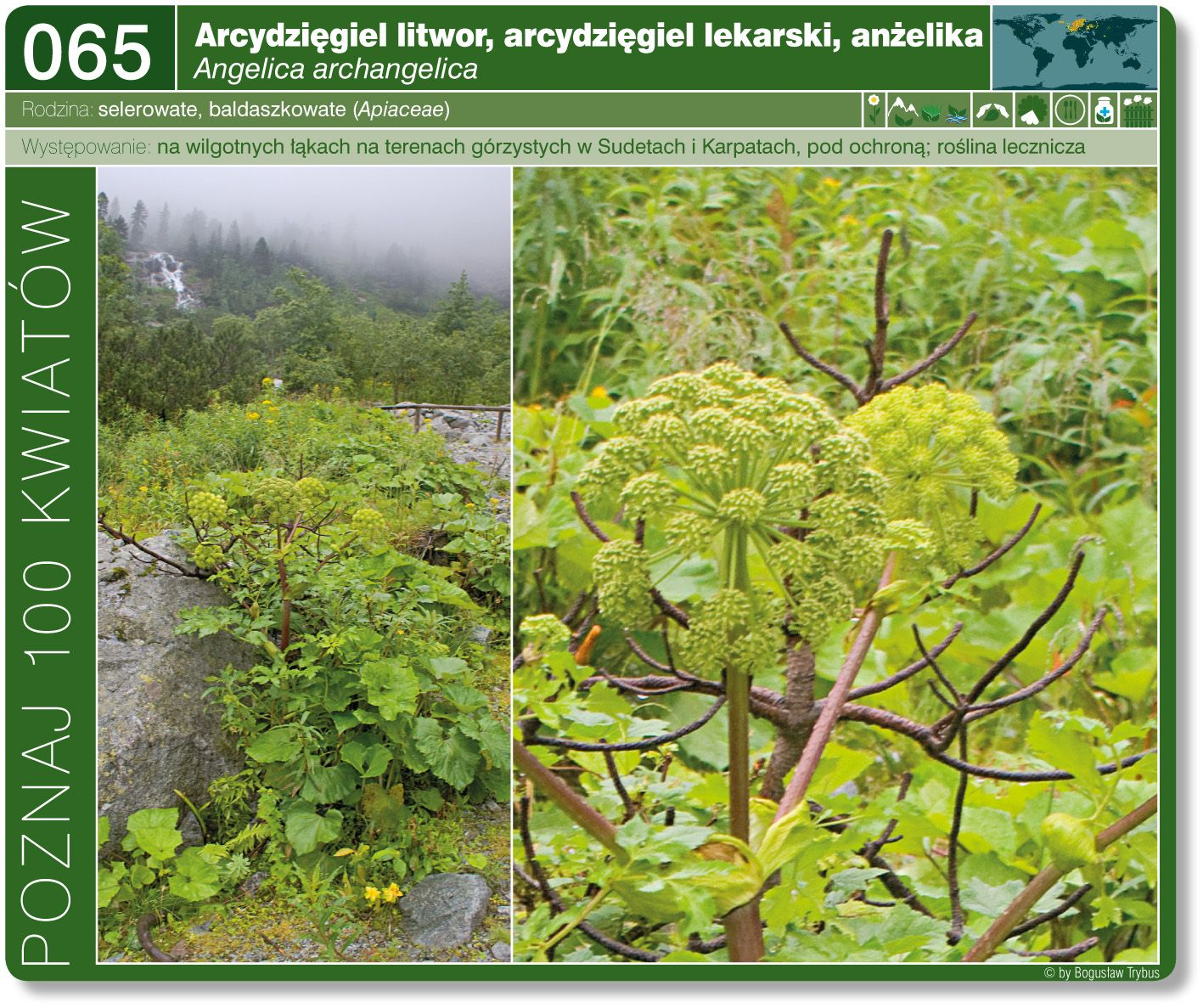 Arcydziegiel Litwor Grapes Fruit