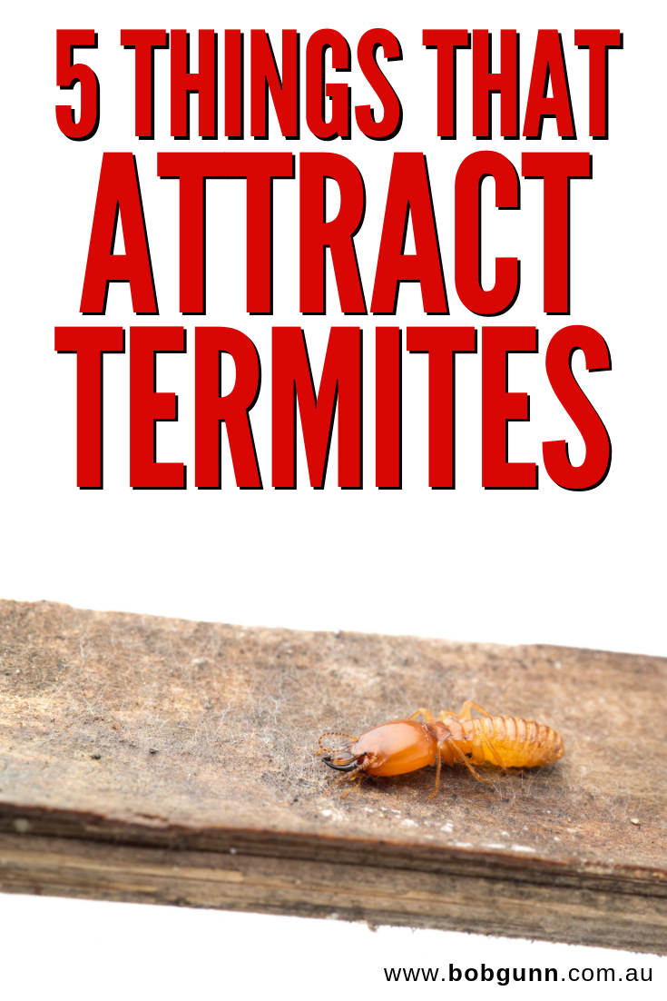 Stop Doing These 5 Things That Attract Termites Termite