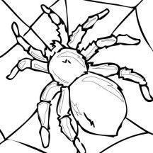 Tarantula On His Spider Web Coloring Page Risunok Krolika