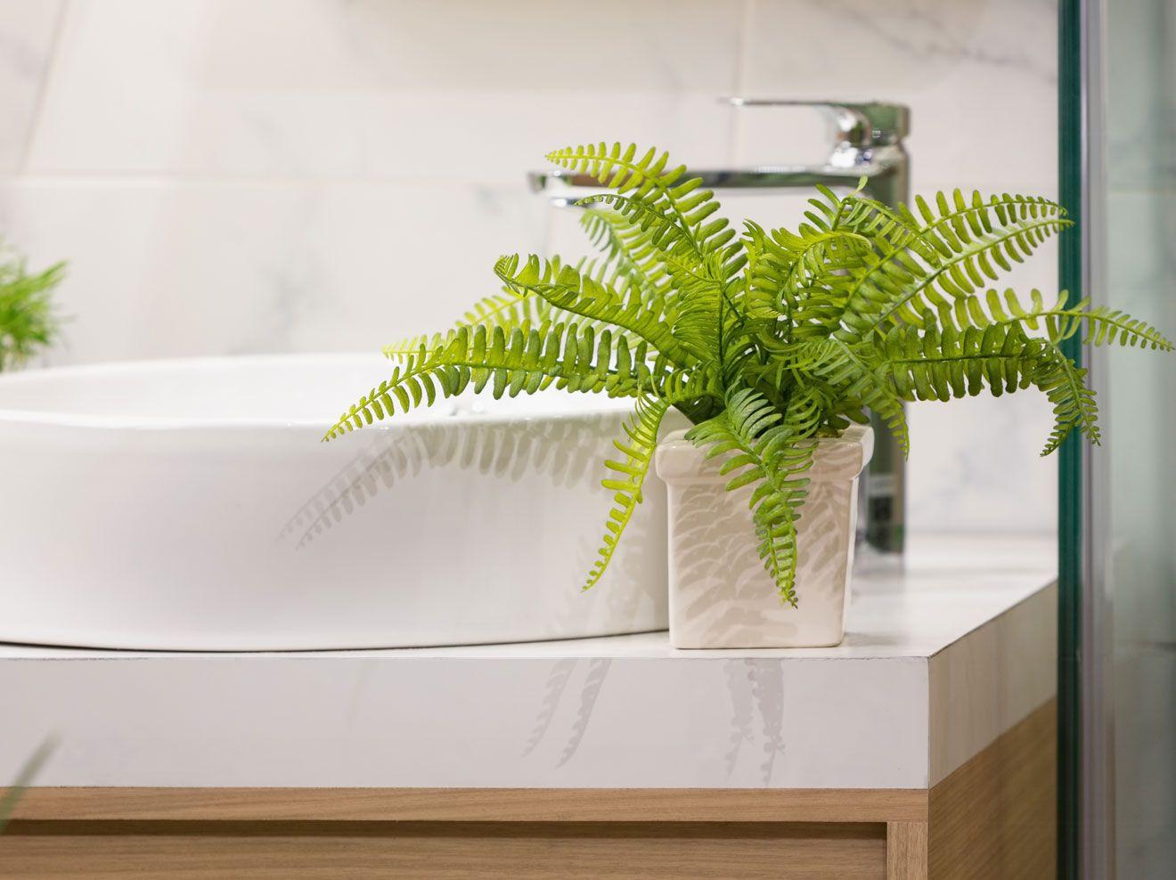 Pflanzen Im Badezimmer Sind Schon Anzusehen Und Sorgen Fur Ein Gutes Raumklima Diese Funf Pflanzen Sind Bes Badezimmerpflanzen Pflanzen Im Badezimmer Pflanzen