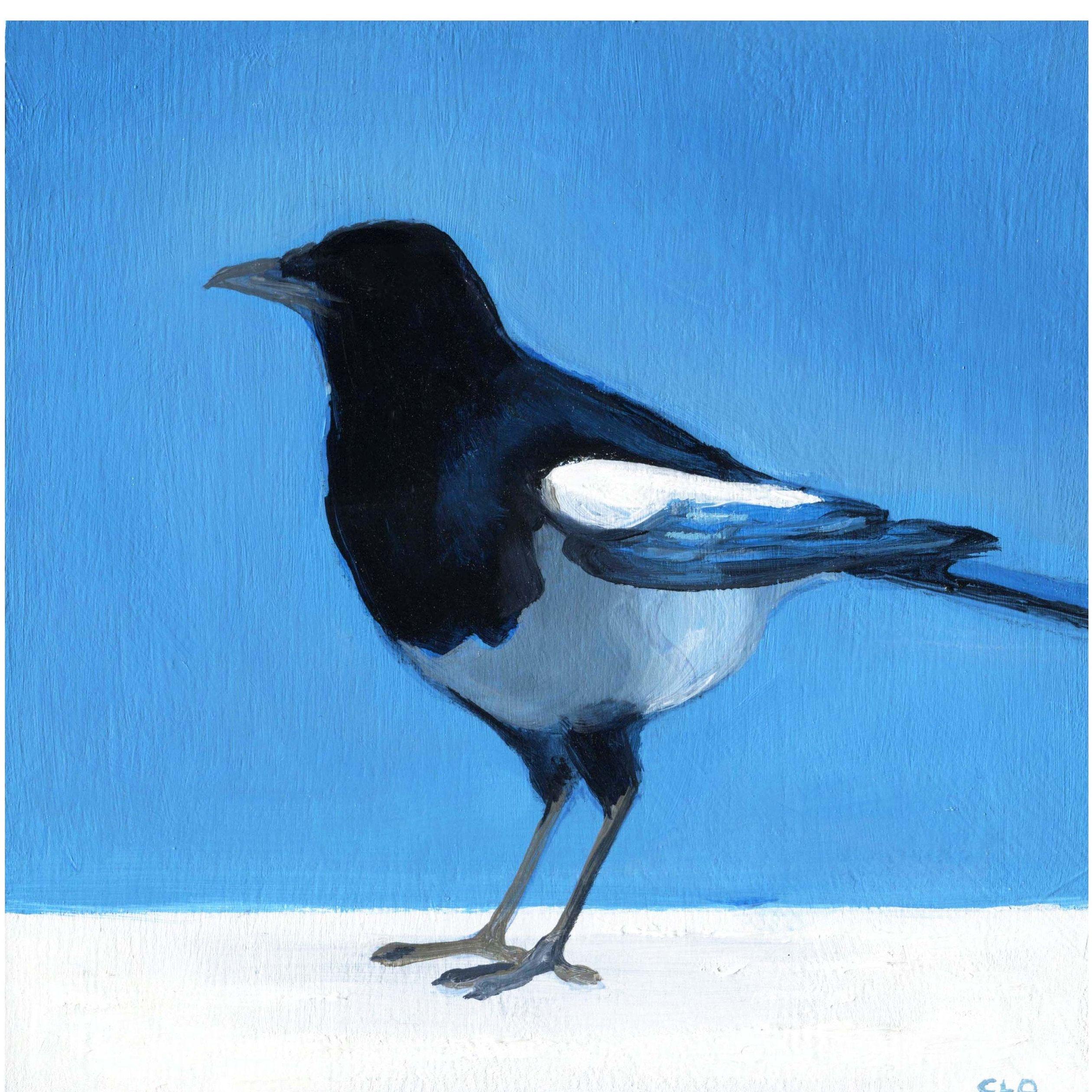 Magpie On Blue Art Print Bright Black White And Blue Bird Art Print Small Magpie Bird Painting Bird Decor Off Blue Art Prints Blue Bird Art Bird Art Print