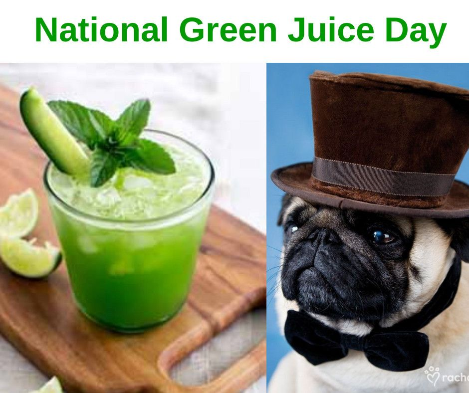 National Green Juice Day................. puglia pugs