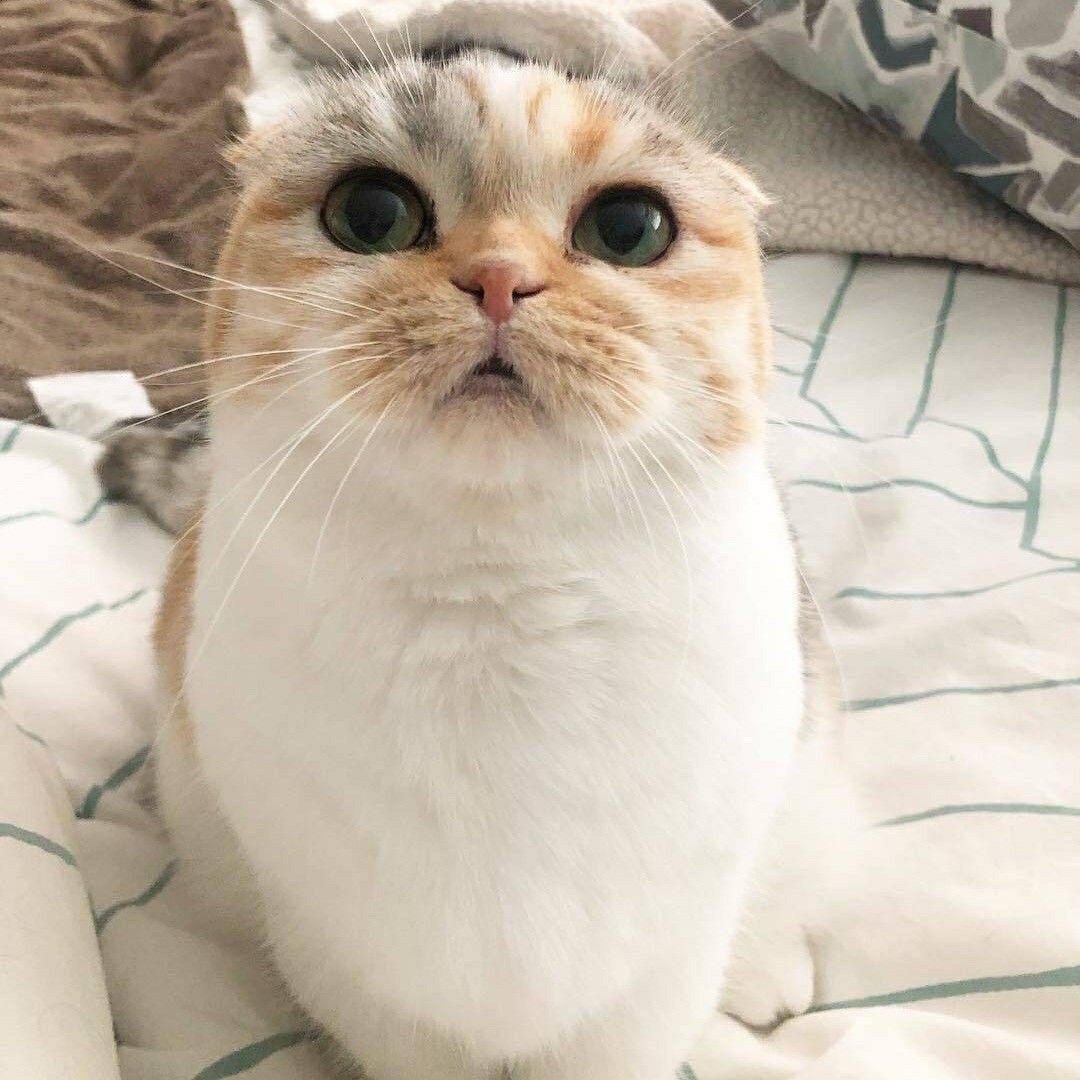 кот эстетика белый милый | Cute puppies, Cats, Kittens