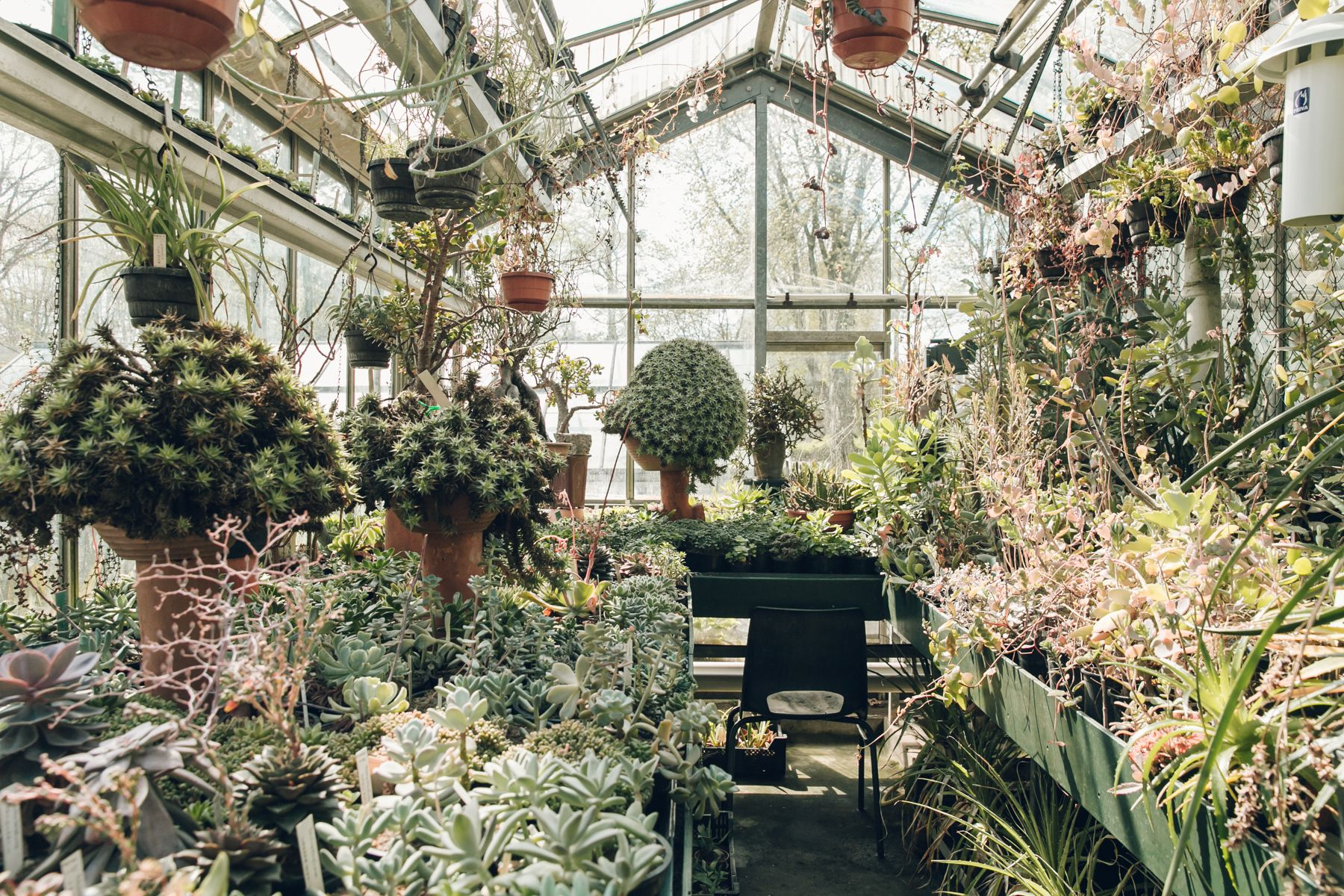 Botanische Tuin Amsterdam : Botanische tuin zuidas u amsterdam greens tuin