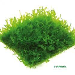 Base de données des plantes   Dennerle