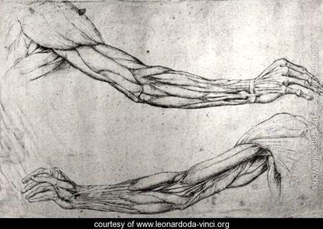 Contour Line Drawing Leonardo Da Vinci : Study of arms leonardo da vinci leonardoda