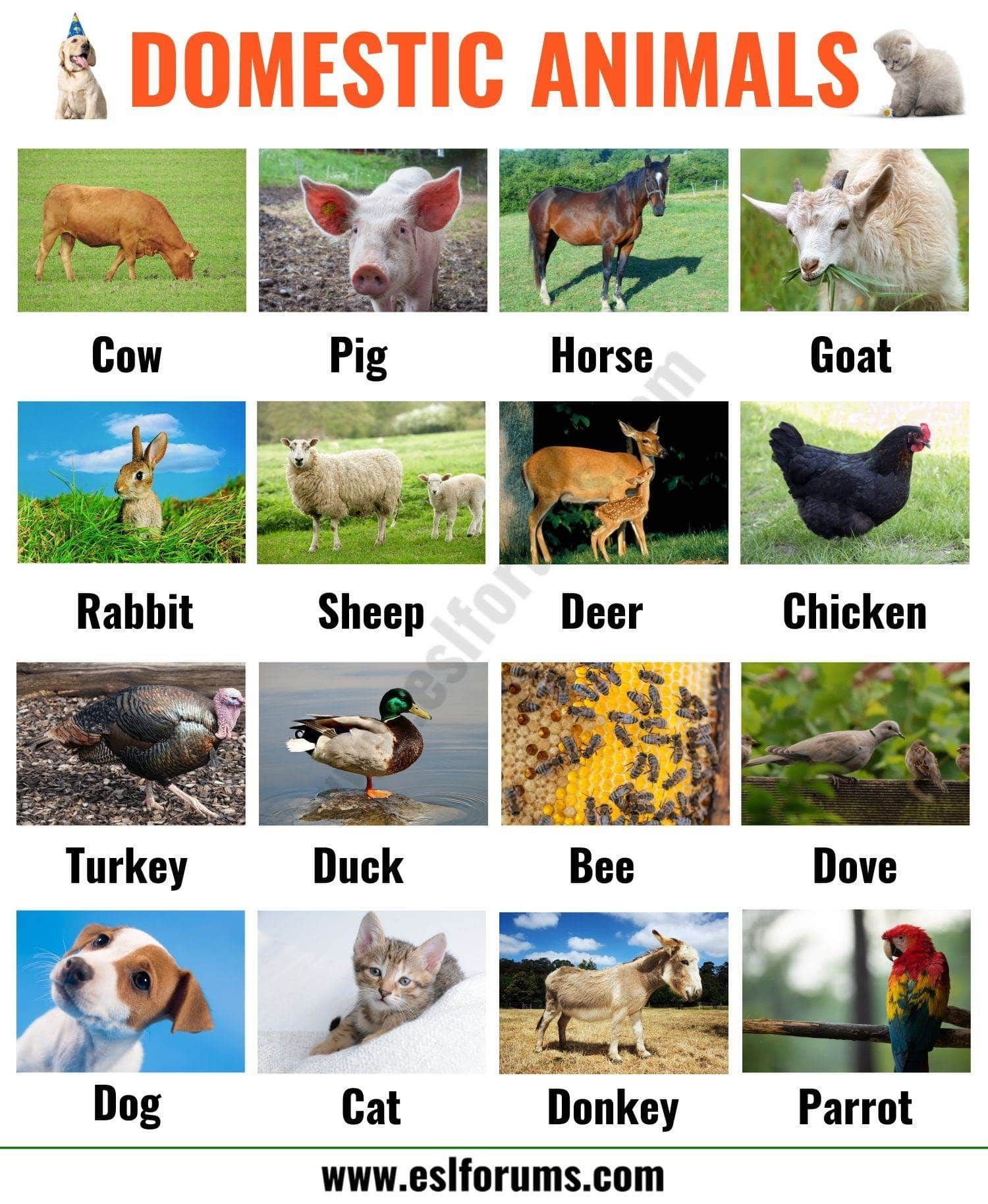 Farm Animals List of 15+ Popular Farm/ Domestic Animals