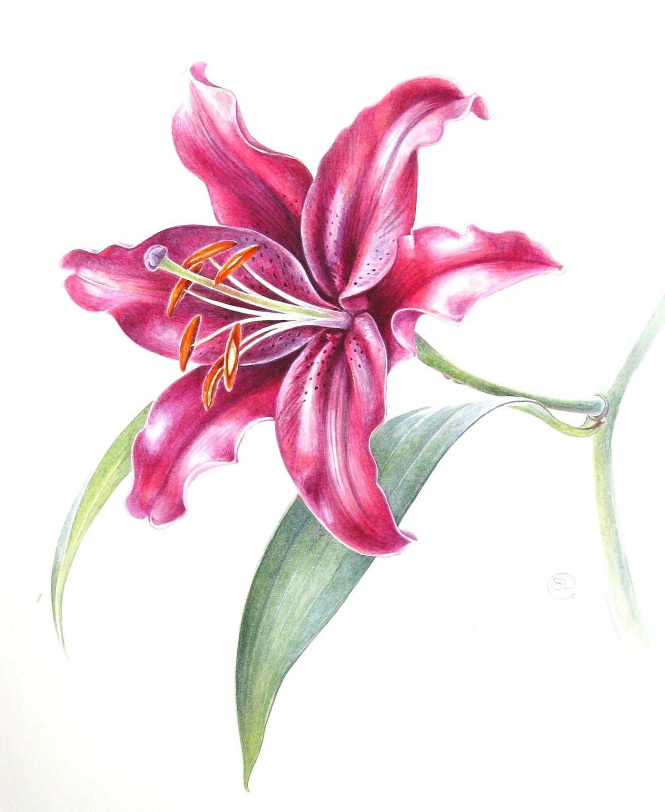 Botanical Sketches and Other Stories Botanical Art