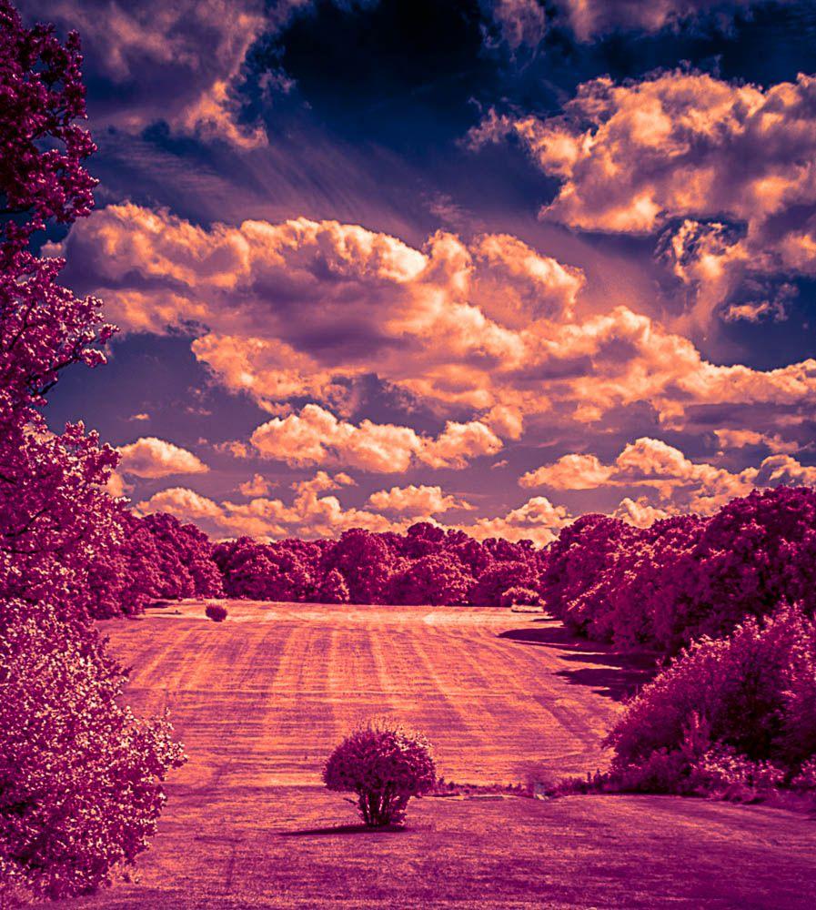 Richard Mosse – Infrared Lands of Fear