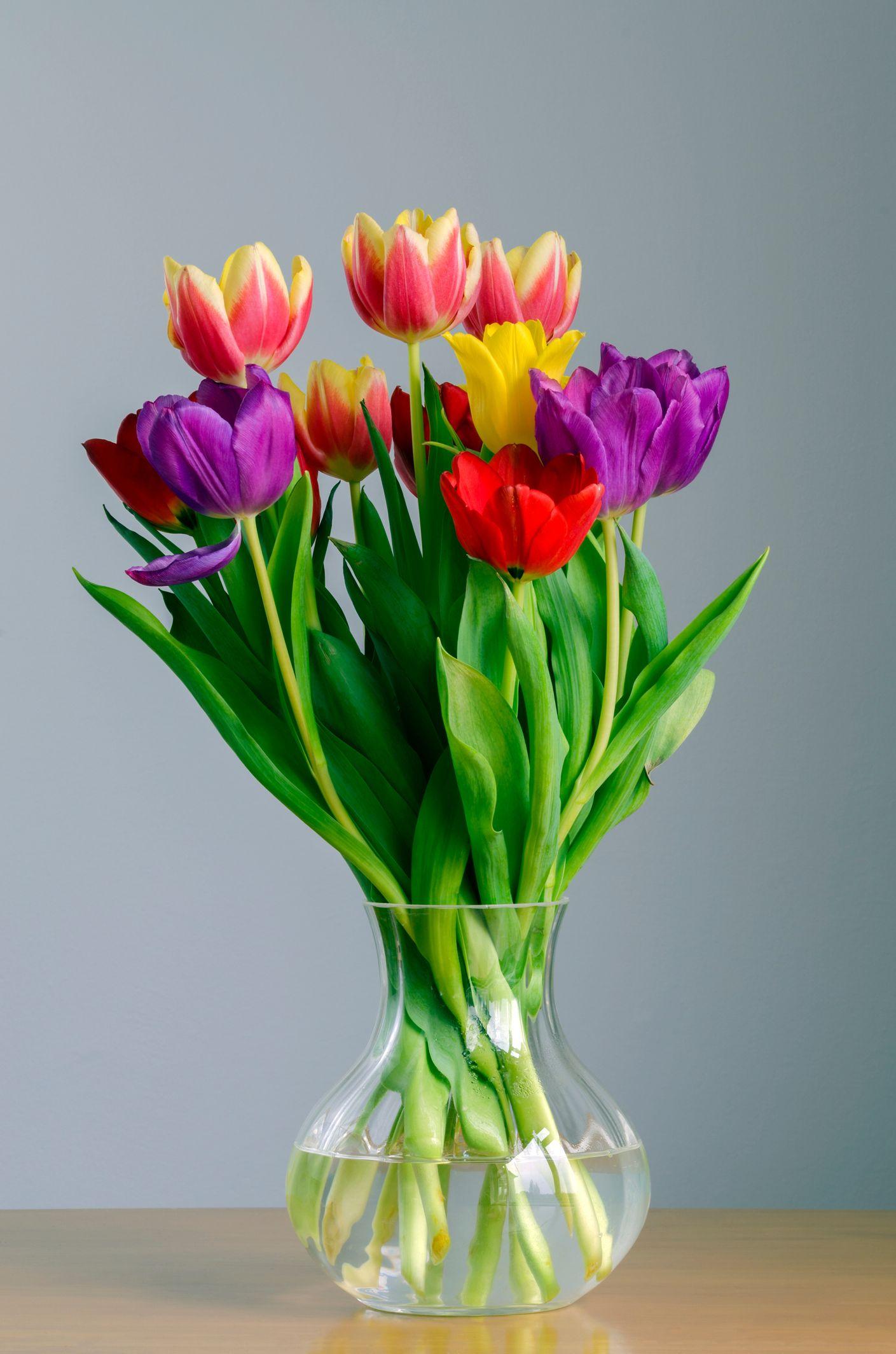 Quelle plante êtesvous? Tulipes dans un vase, Bouquet