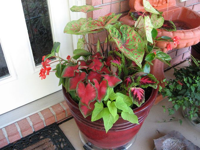 shady with a little sun pot it gets some early rising sun on sweet dreams for your home plants decoration precautions and options id=20921