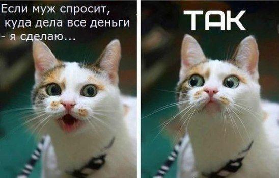 Поднимаем настроение. Жизненно...   Веселые картинки, Кот ...