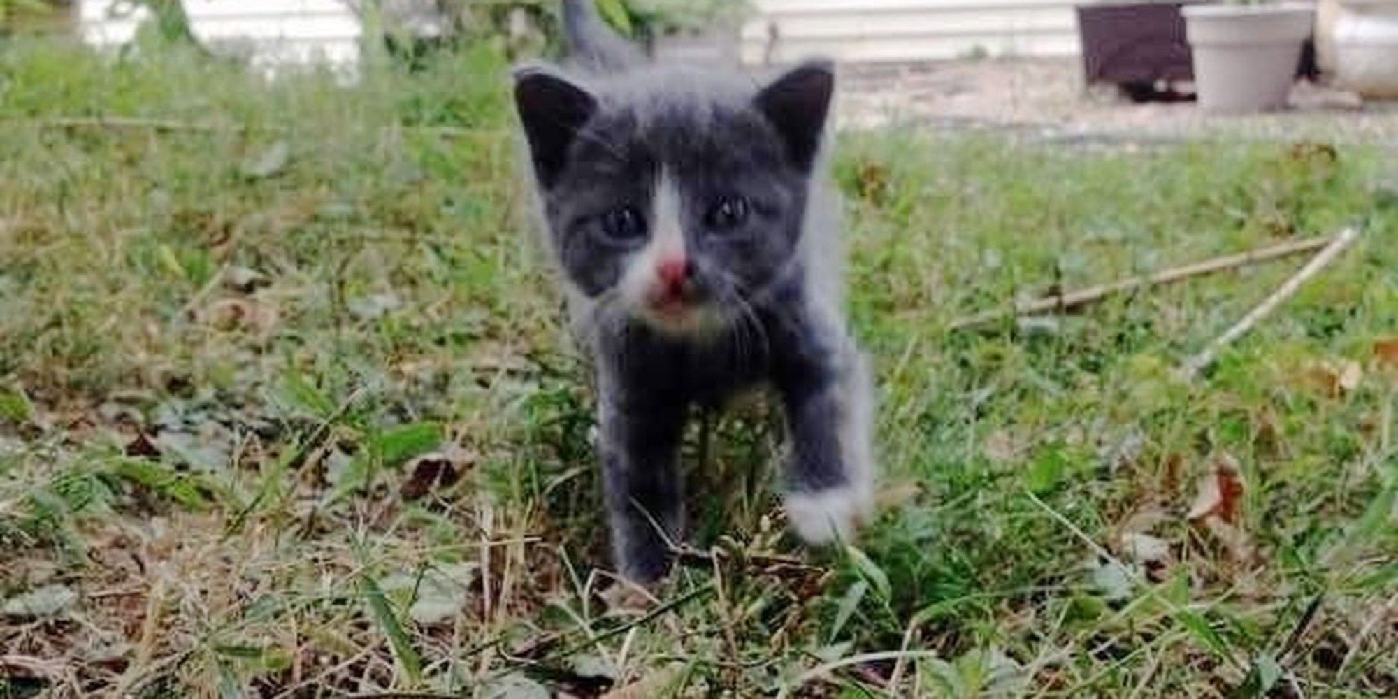 A Tiny Stray Kitten Came Out From Under A Spruce Tree And