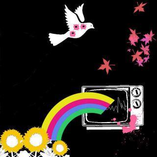 bang bird rain bow picture and wallpaper