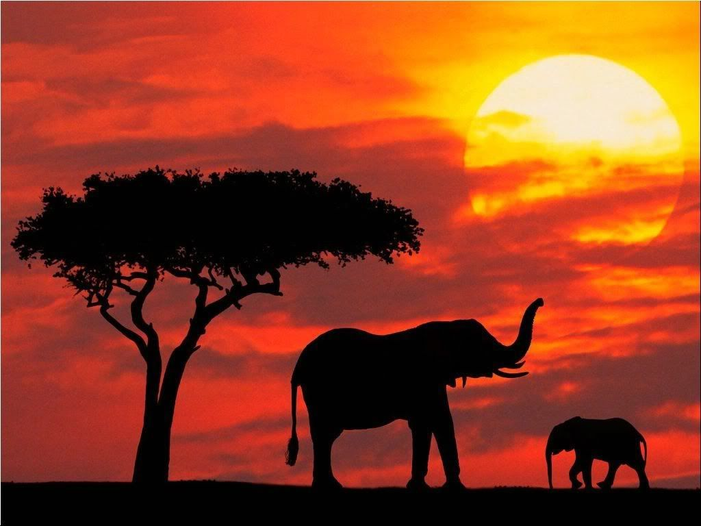 africa sunset | south africa gerickes point south africa sunset in central  kenya | African sunset, Scenery, Silhouette photography