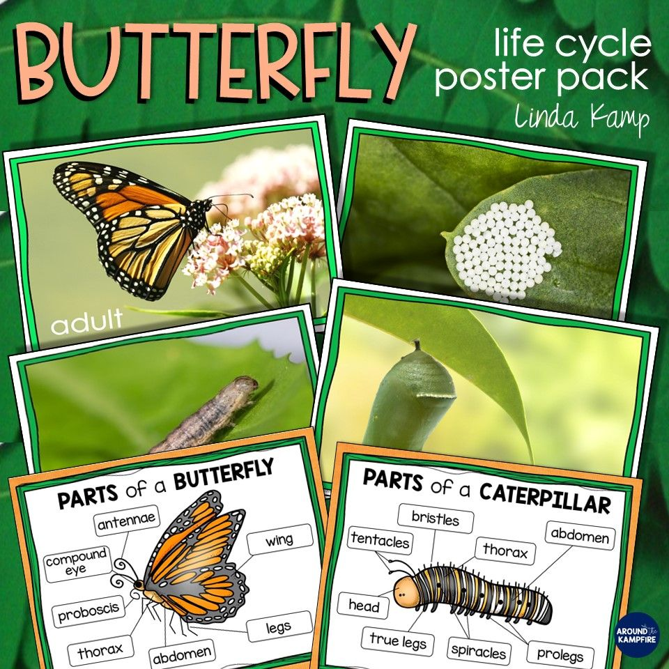 Butterfly Life Cycle Resources Free Printables Around The Kampfire Butterfly Life Cycle Butterfly Life Cycle Activity Butterfly Life Cycle Posters [ 960 x 960 Pixel ]