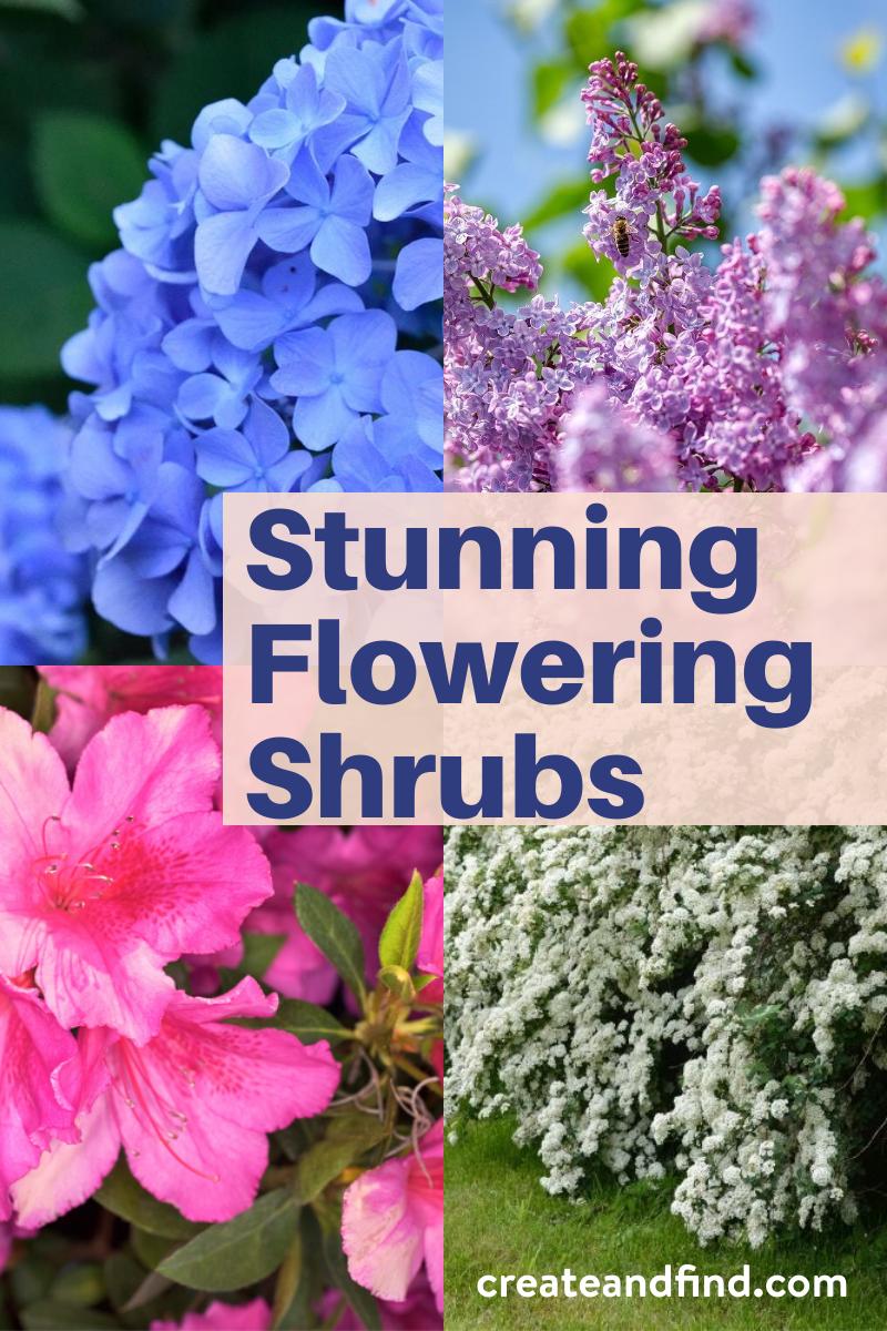 List Of Stunning Flowering Shrubs In 2020 Flowering Shrubs Flowering Bushes Shrubs
