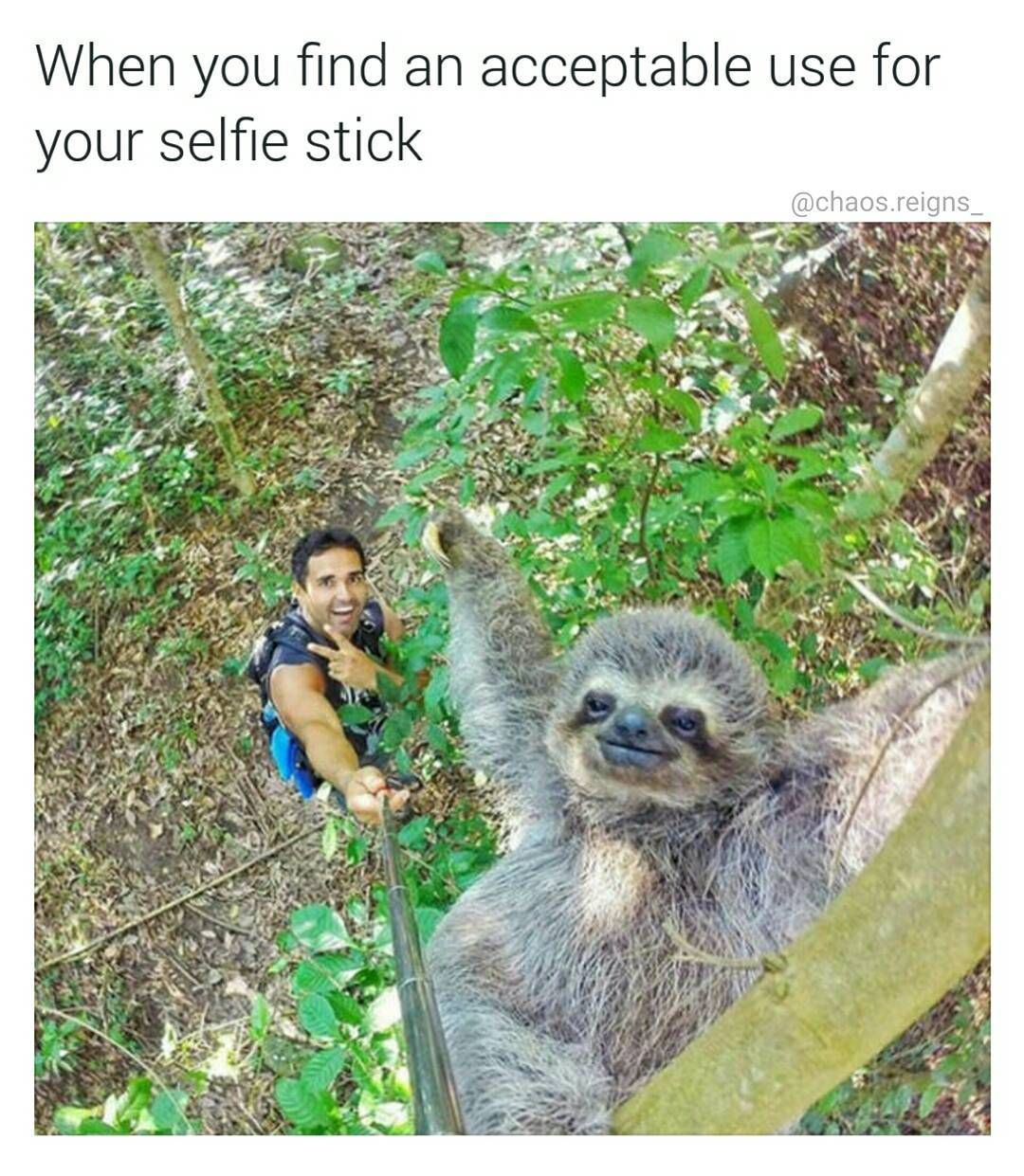 Live slow die whenever sloth life follow chaos reigns never classy funnies funny - Funny sloth pics ...