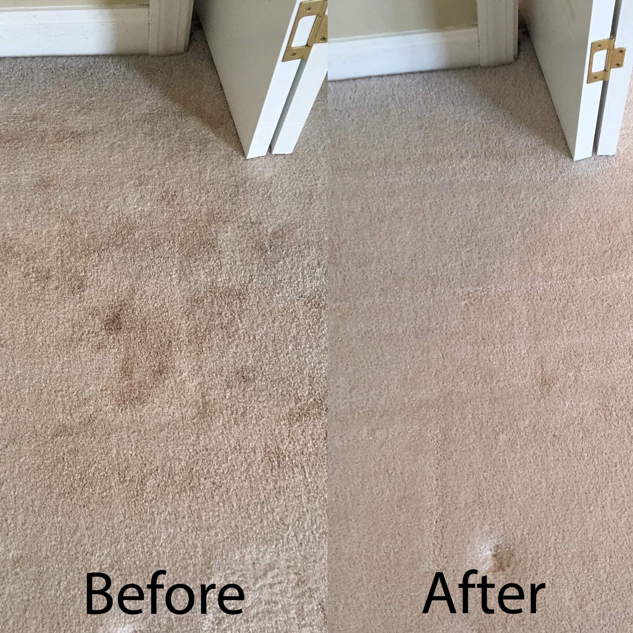 Using Hot Water Extraction We Treat And Remove Most Pesky Spots Staining Your Carpet Call For A Free Green Carpet Cleaning Green Cleaning Company Green Carpet