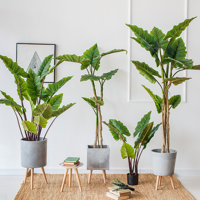 Indoor Decorative Green Plants Cheap Artificial Trees Rainbow Taro Bonsai For Sale 2019 Buy Artificial Bonsai Plants Artificial Indoor Plants Cheap Artificial In 2020
