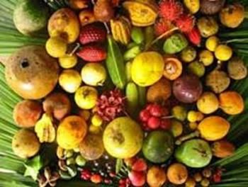 Children will identify and taste various rainforest fruits and ...