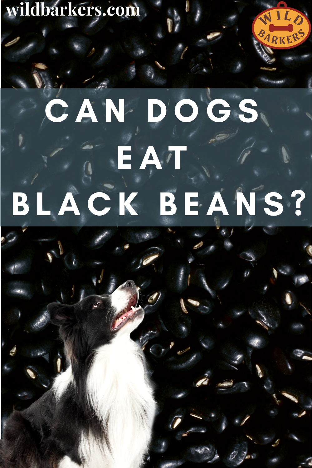 Pin On Can Dogs Eat
