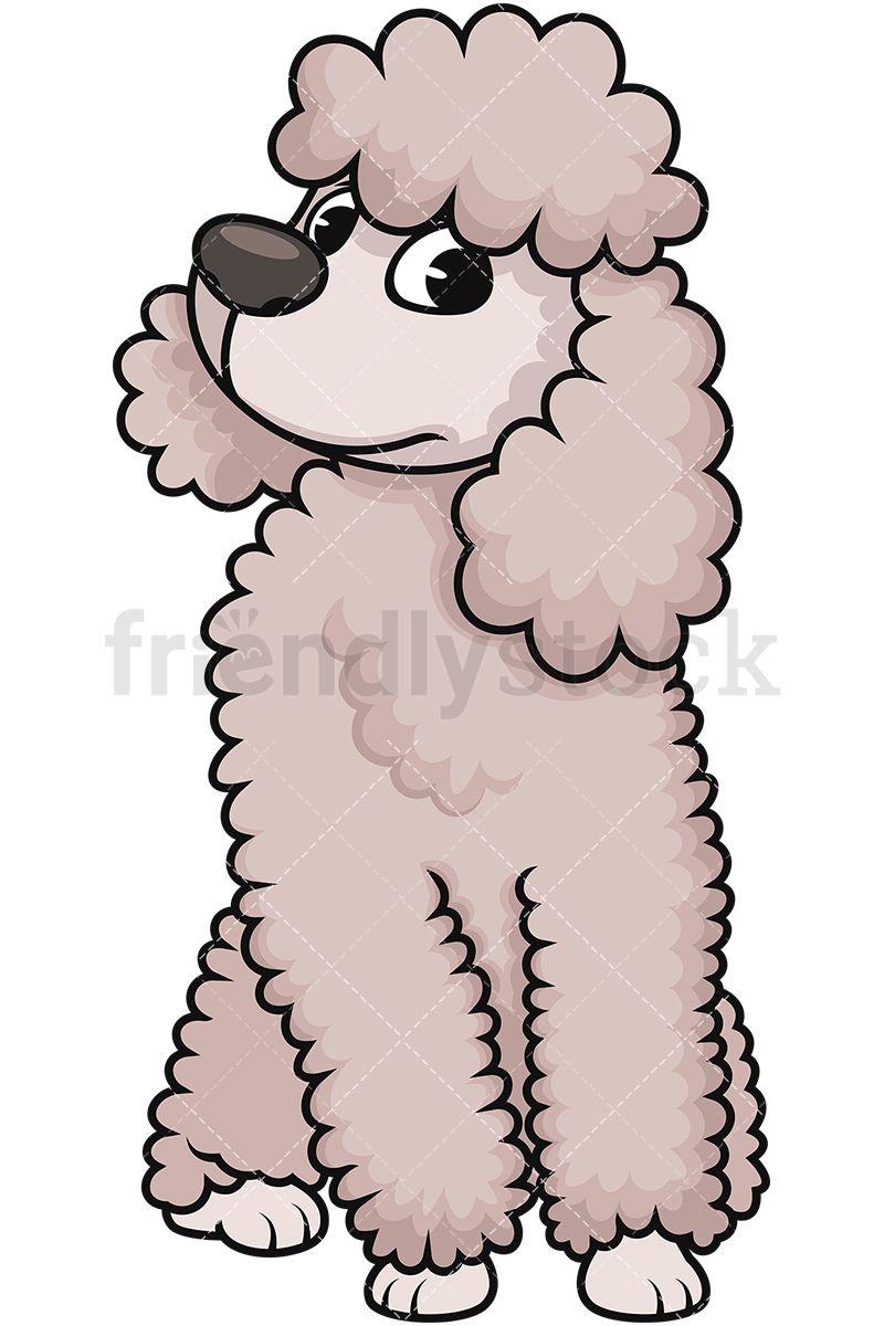 Curious Miniature Poodle Poodle Cartoon Clip Art