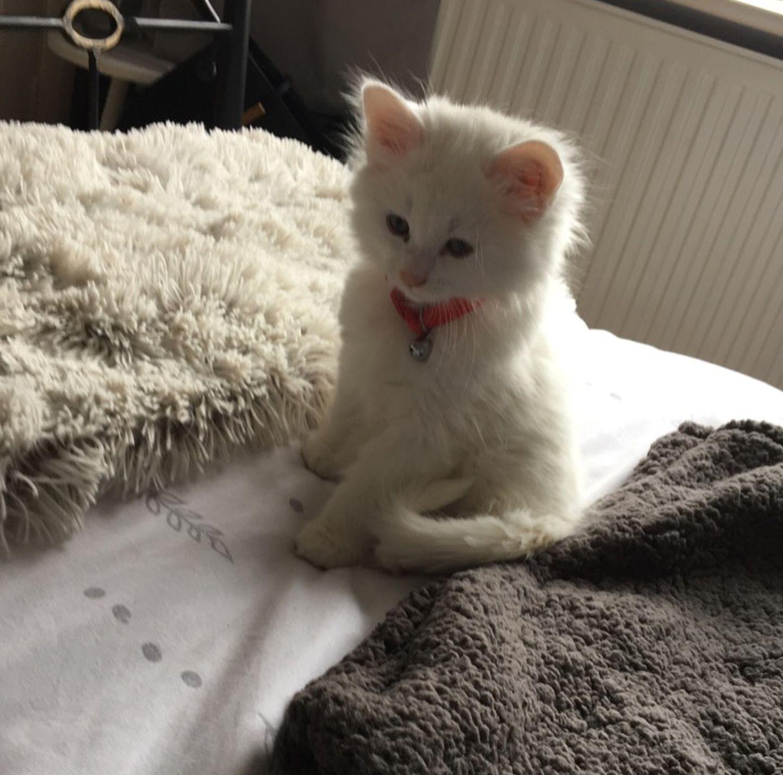 My Housemates 9 Week Old Kitten Barry White Cat Language Kitten Kittens