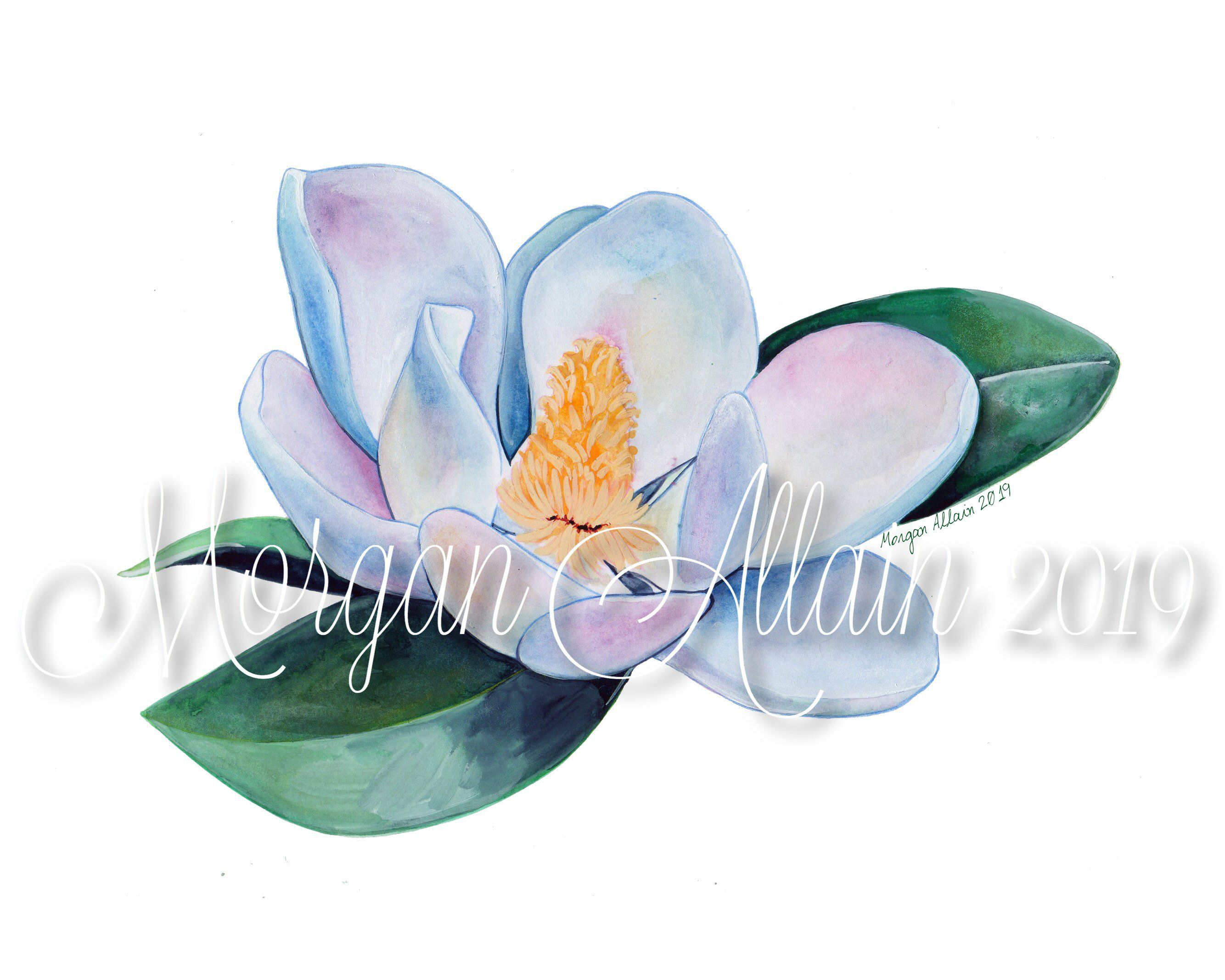 Louisiana Magnolia Bloom No 2 8x10 Art Print 8x10 Art Prints Art Prints Watercolor Artwork