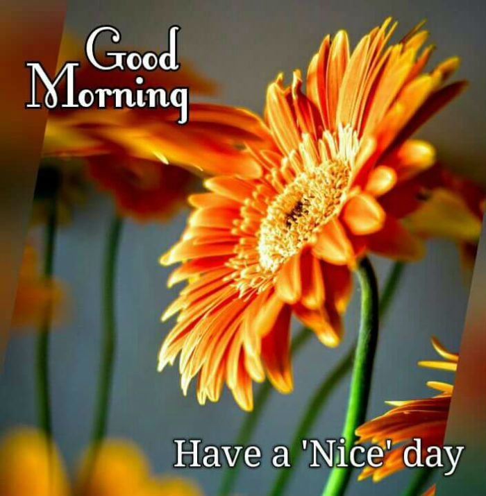 Image result for goodmorning images
